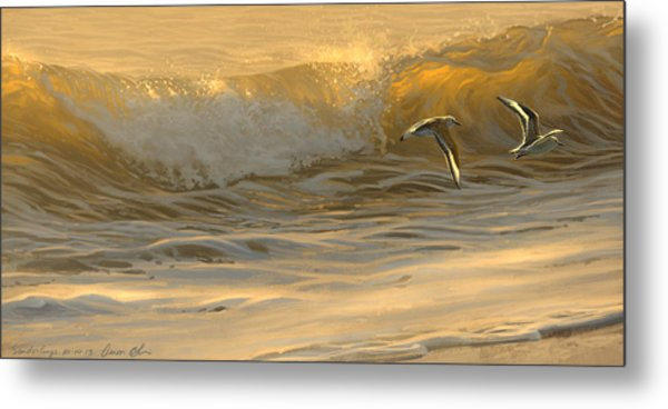 Sanderlings Metal Print