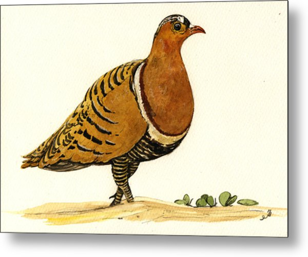 Sandgrouse Metal Print by Juan  Bosco