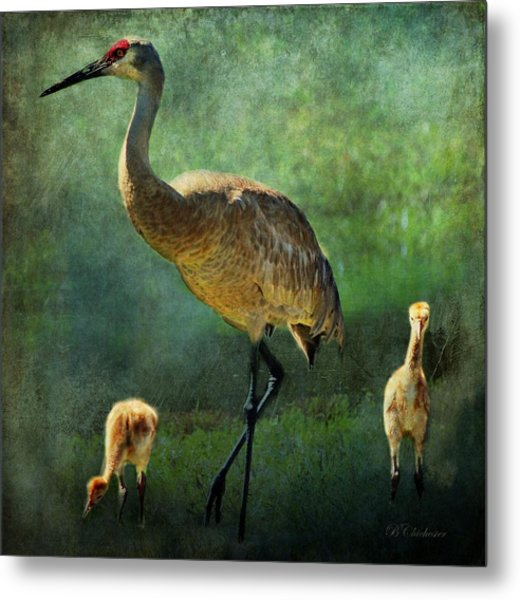 Sandhill And Chicks Metal Print