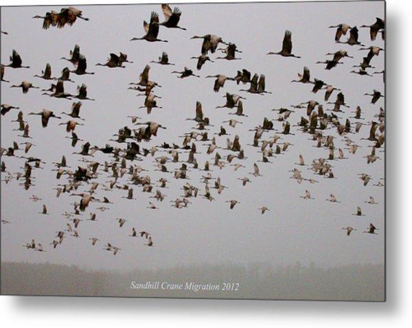 Sandhill Crane Migration Metal Print