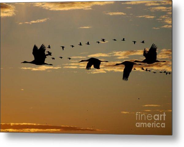 Sandhill Cranes At Sunset Metal Print
