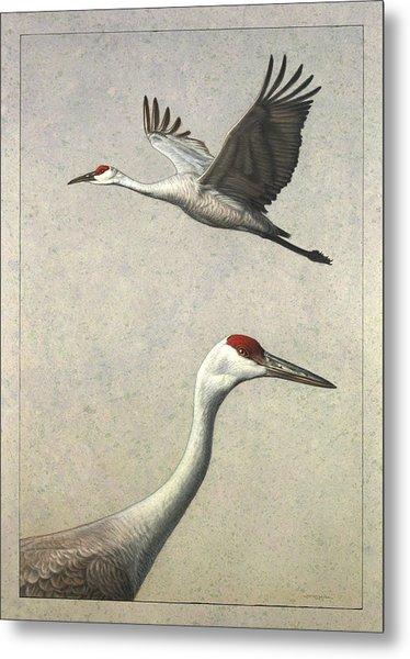 Sandhill Cranes Metal Print