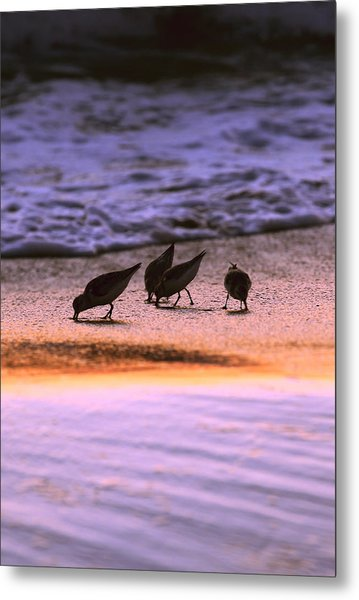 Sandpiper Morning Metal Print