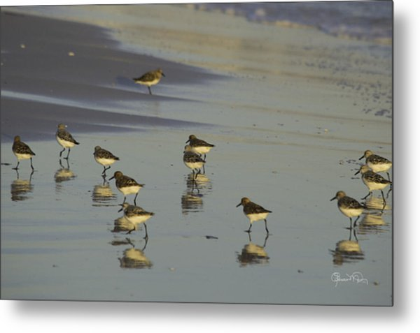 Sandpiper Sunset Reflection Metal Print