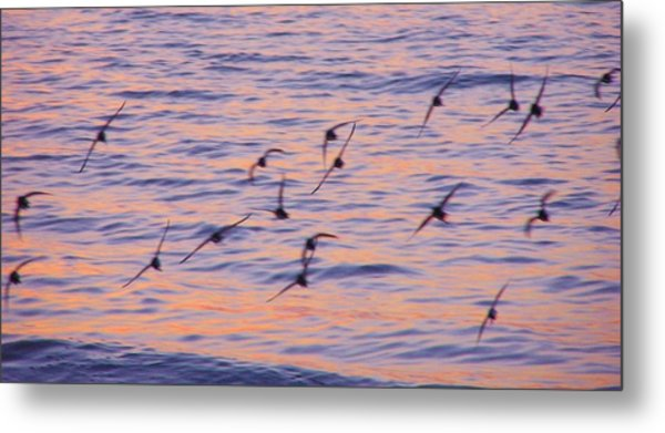 Sandpipers At Sunset Metal Print
