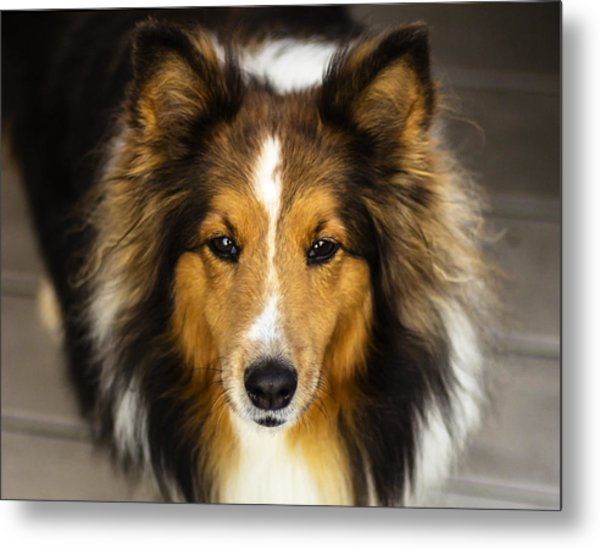 Sandy The Perfect Model Metal Print