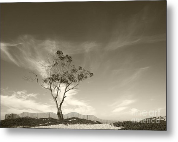 Save The Tree Metal Print
