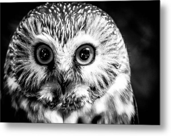 Saw-wet Owl Metal Print