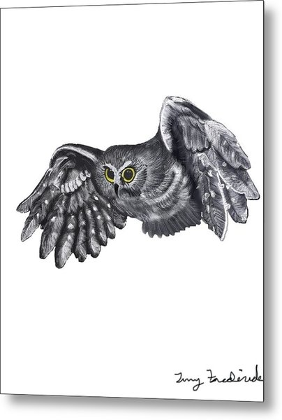 Saw-whet Owl Metal Print