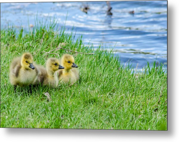 Staying Together Metal Print
