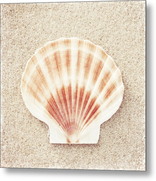 Scallop Shell Metal Print