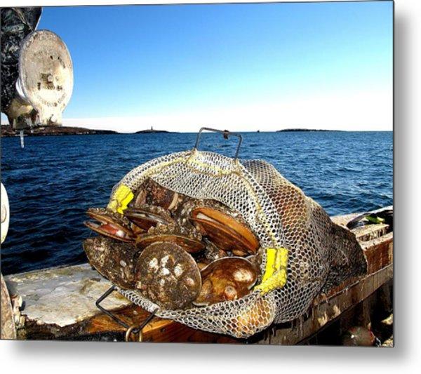 Scallops Bounty Of The Sea Metal Print