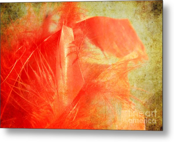 Scarlet On Vintage Metal Print