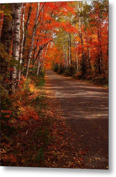 Scenic Maple Drive Metal Print