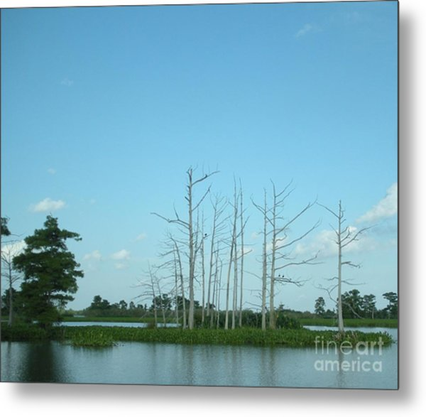 Scenic Swamp Cypress Trees Metal Print