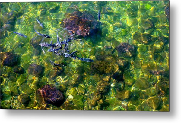 School Of Fish Metal Print by Olga Breslav