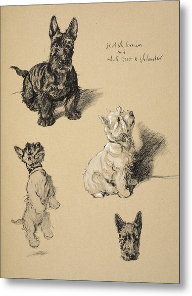 Scotch Terrier And White Westie Metal Print