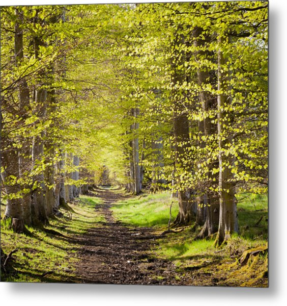Scotland Grove Metal Print