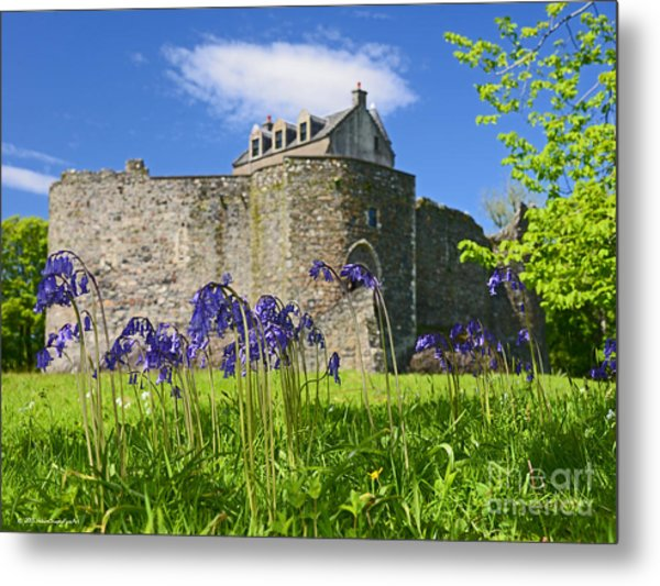 Scots Spring Bluebell Flowers At Scotland Dunstaffnage Castle  Metal Print