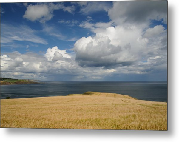 Scottish Coastal Wheatfield Metal Print