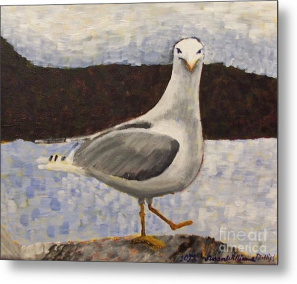 Scottish Seagull Metal Print