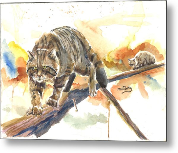 Scottish Wildcat Tom Metal Print