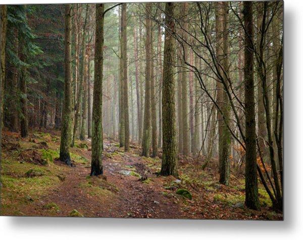 Scottish Woods Metal Print