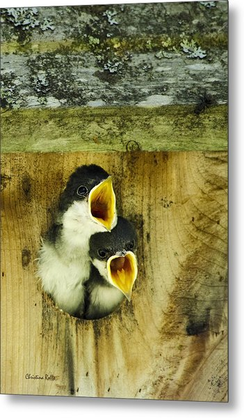 Screaming Hungry Metal Print