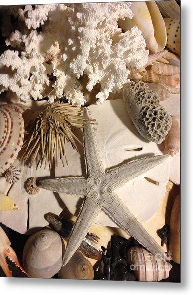 Sea Finds Metal Print