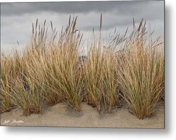 Sea Grass And Sand Metal Print