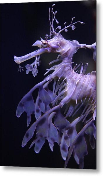 Sea Horse Metal Print