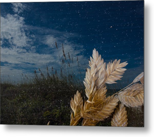 Sea Oat Beach Metal Print