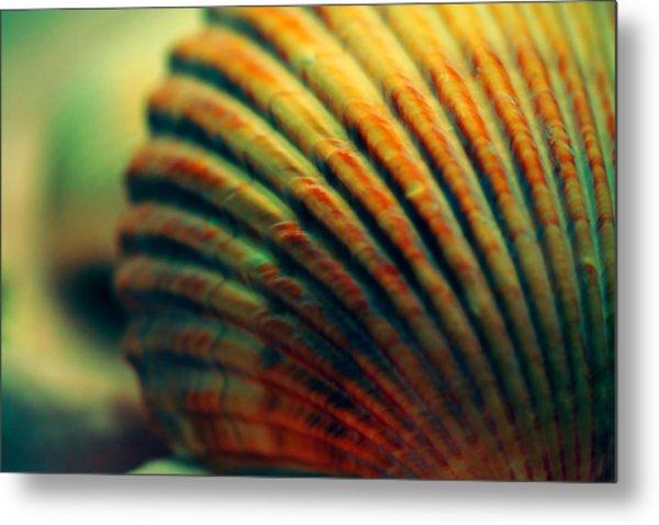 Sea Shell Art 1 Metal Print