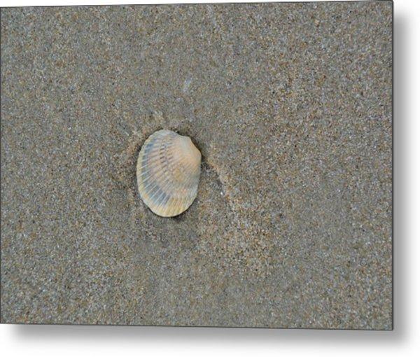 Sea Shell Sally Metal Print by JAMART Photography