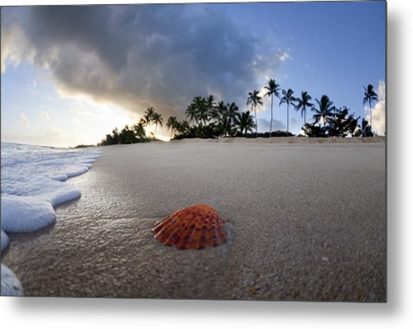 Sea Shell Sunrise Metal Print