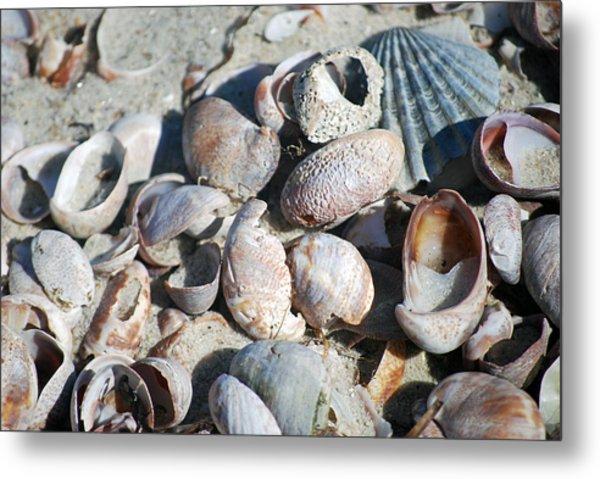 Sea Shells Metal Print by Alan Holbrook