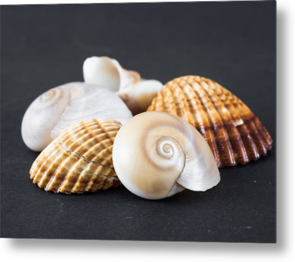 Sea Shells On A Black Background Metal Print
