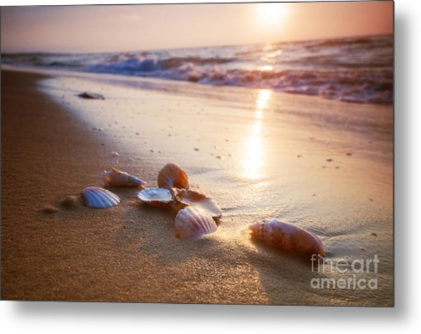 Sea Shells On Sand Metal Print