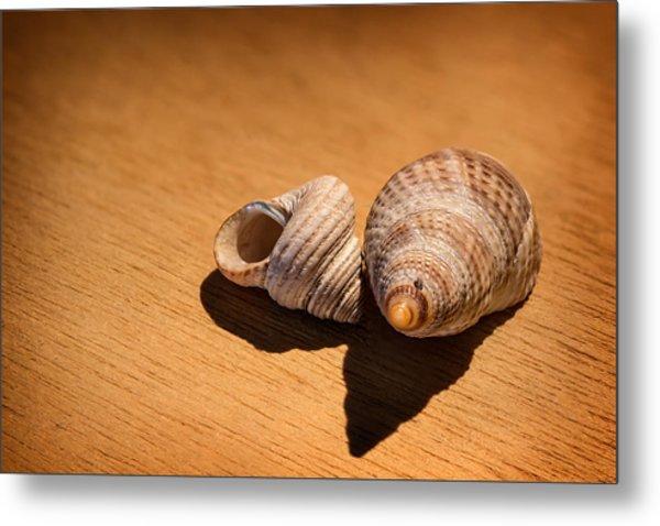 Sea Shells_3 Metal Print by Joe Hudspeth