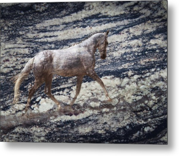 Sea Stallion Metal Print