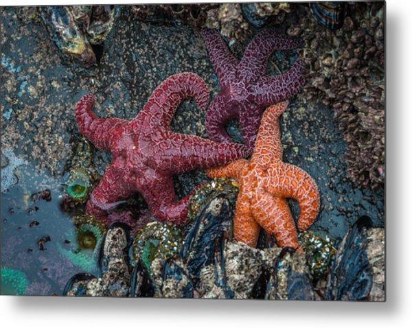 Sea Stars Metal Print by Mike  Walker