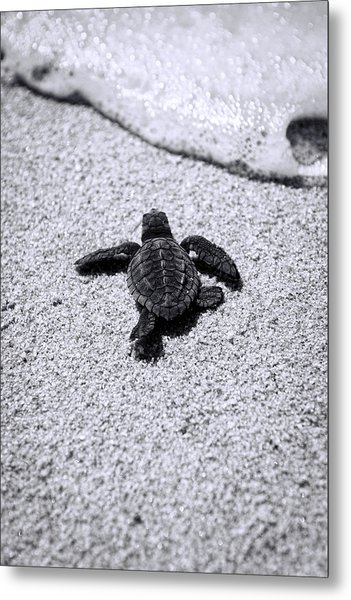 Sea Turtle Metal Print