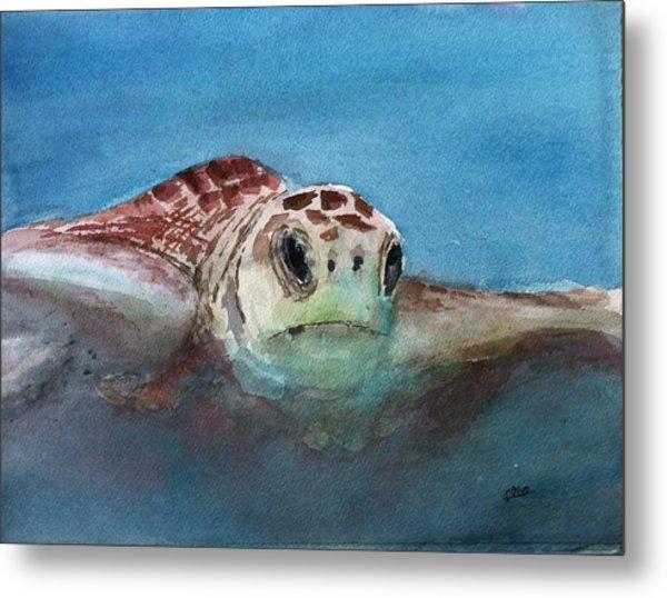 Sea Turtle  Metal Print by Stephanie Sodel