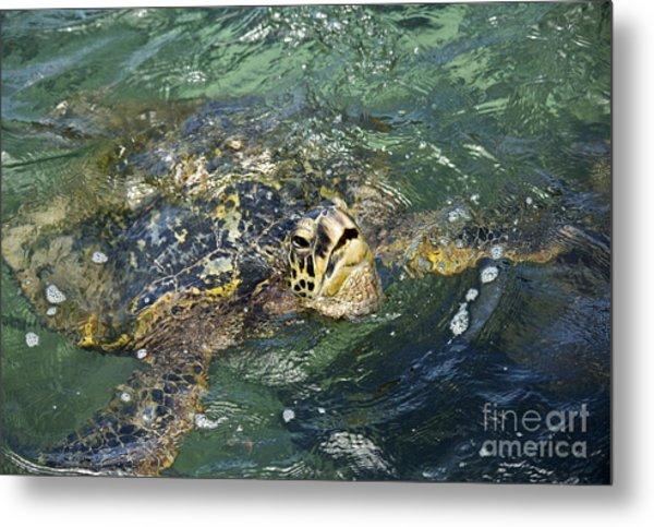 Sea Turtle Surface Metal Print by Paul Karanik