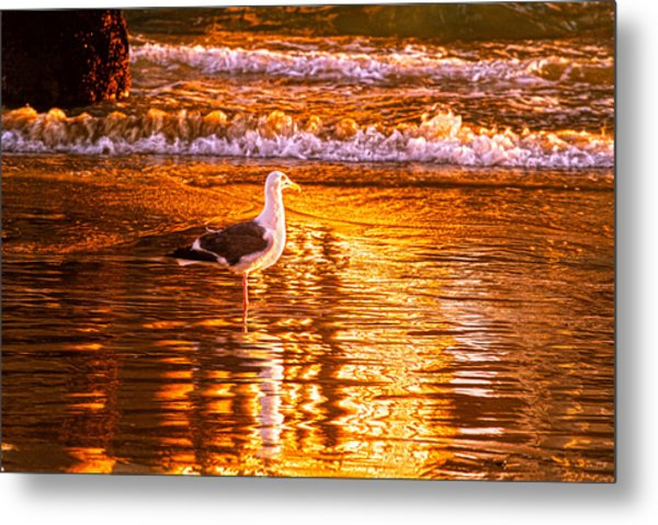 Seagul Reflects On A Golden Molten Shore Metal Print