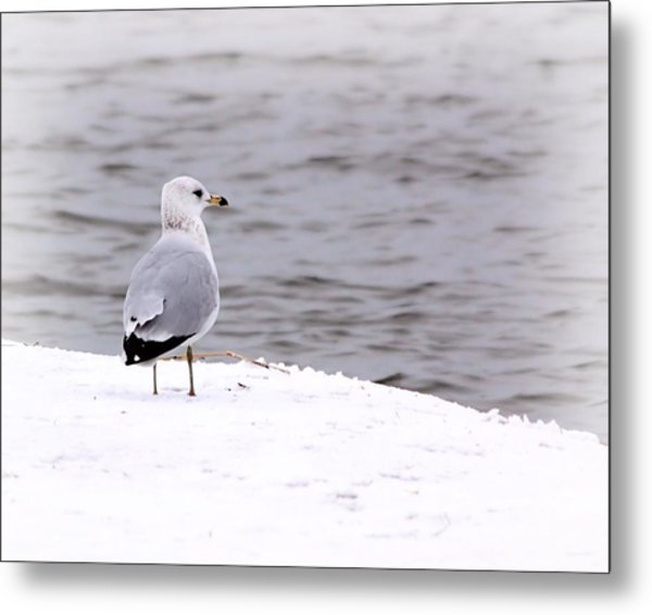 Seagull At The Lake In Winter Metal Print by Elizabeth Budd