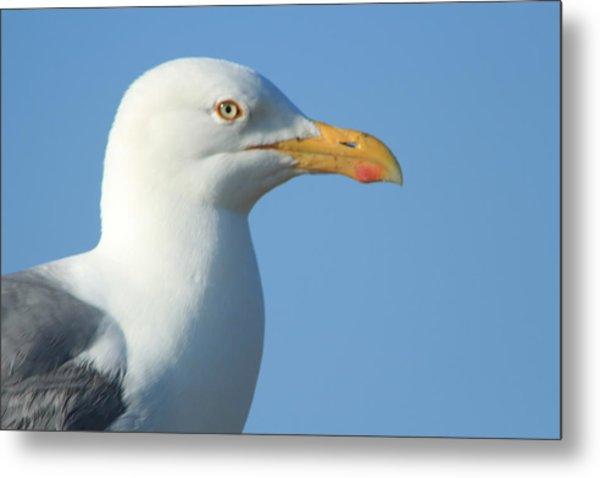 Seagull  Metal Print by Diane Rada