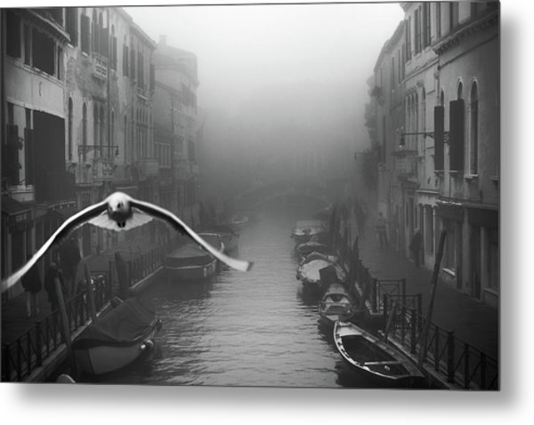Seagull From The Mist Metal Print