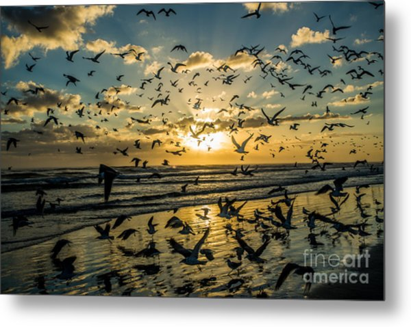 Seagull Migration Metal Print by Mina Isaac