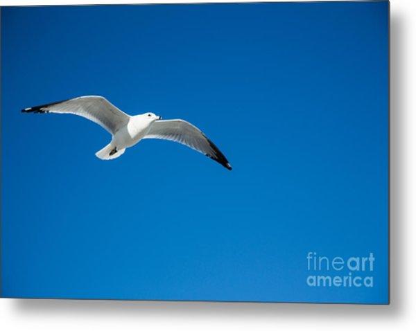 Seagull In Blue Skies Metal Print by Mina Isaac
